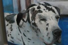 Deense dog (verkocht)
